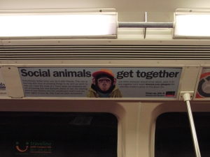 Shot of the monkey Timeout advert on the Glasgow underground. Clear visual of a rather mischievous lookingmonkey.